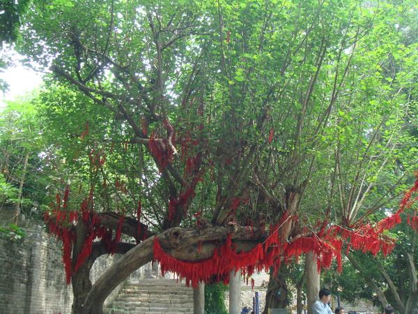 杨梅古镇9
